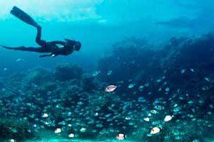 exp snorkel 300x200 - Salida de buceo con tubo en San José
