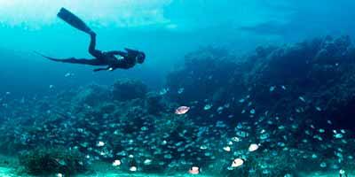 exp snorkel - Salida de buceo con tubo en San José
